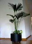 150_plant.jpg