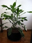 151_plant.jpg